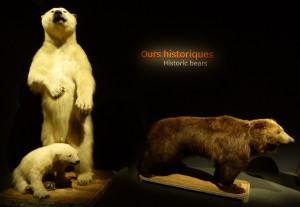Ours de La Fayette - expo Espèces d'ours (MNHN) Photo ©L Veron-Dor
